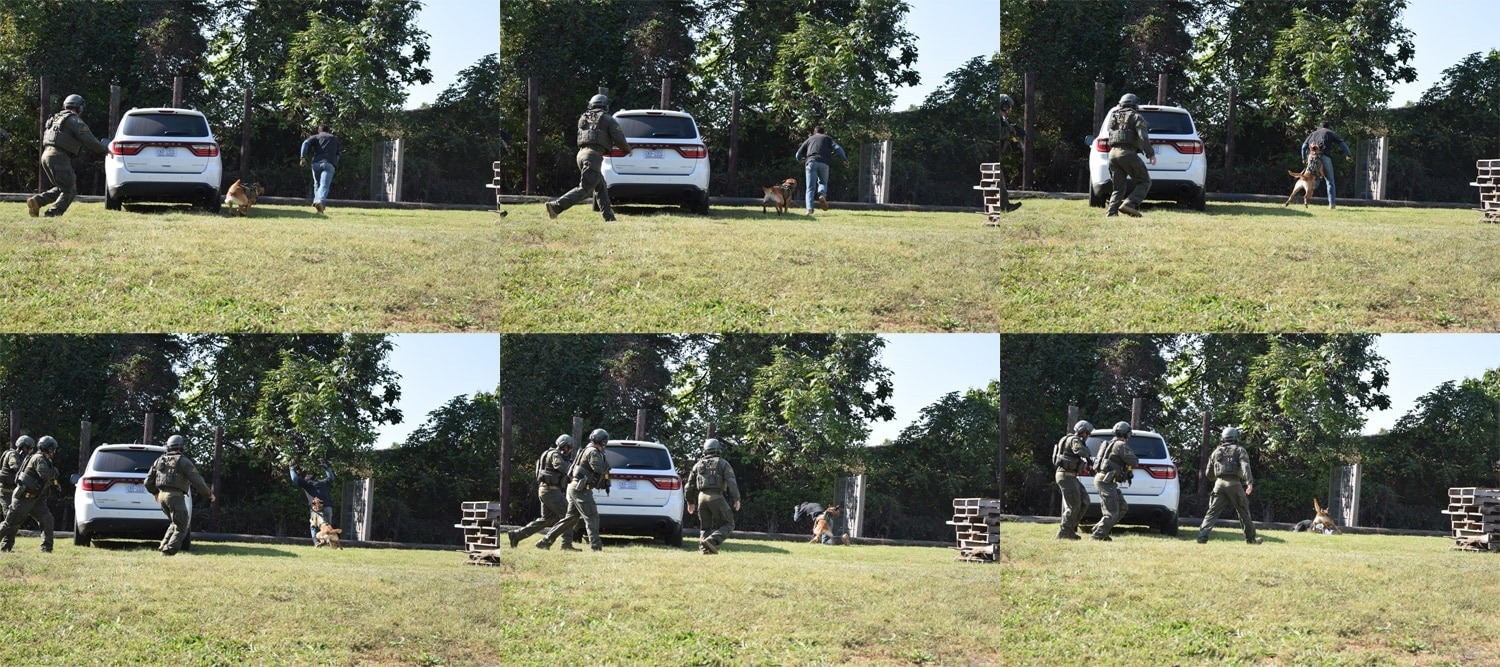 Every law enforcement department has dogs trained for specific tasks. ATF has extremely high standards for its SRT dogs. This dog named Ace shows just how quickly he can take down a suspect. (Photo: Daniel Terrill/Guns.com)