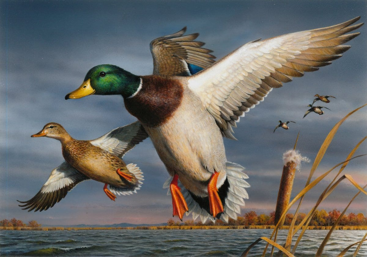 Hauptman's stamp design, announced as the winner of the contest on Saturday, will go on sale in late June 2018 and is expected to raise $40 million in funds to conserve and protect wetland habitats.