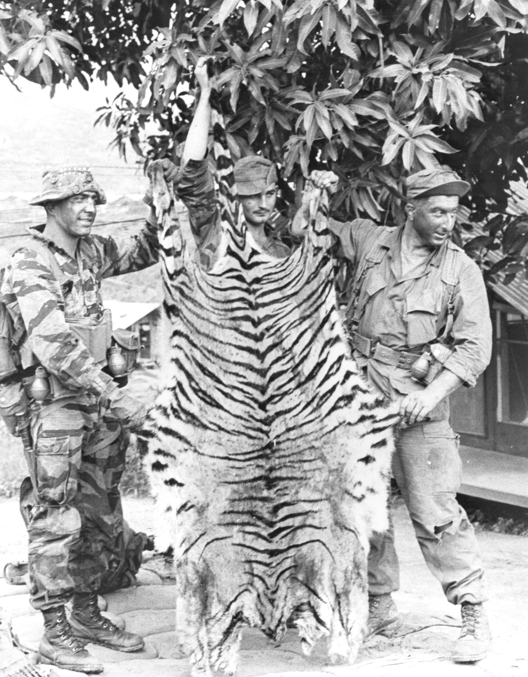 """""""Marines of the 1st Reconnaissance Battalion hold up a tiger skin that belonged to a tiger they killed on Thanksgiving Day during a five day patrol. From left to right: Lance Corporal James Ortega, Lance Corporal Thomas L. Little, and Sergeant James L. Griffith."""" November 1967 (Photo: USMC)"""