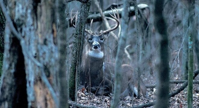 Indiana issues emergency rule to fix goof affecting rifles hunters this deer season