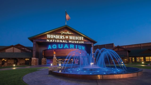 The Wonders of Wildlife National Museum and Aquarium won USA Today's poll for best new attraction in 2017. (Photo: Wonders of Wildlife National Museum & Aquarium)