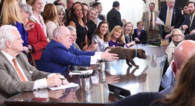 With over 200 bills signed Tuesday, ranging from animal welfare laws to gun measures, the Baltimore Humane Society was on hand with puppies for the event, with Gov. Hogan shown with one in hand. (Photo: Maryland Governor's Office)