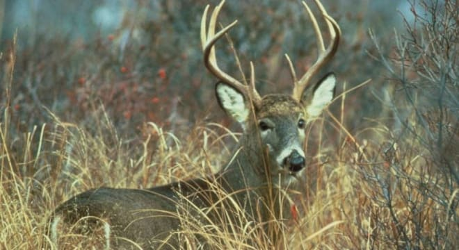 Gun rights groups argue outdated Sunday bans deny sportsment access to the very outdoor resources they paid to support through Pittman-Robertson funds leveed on sales of guns and ammo. (Photo: Delaware Division of Fish & Wildlife Wildlife)