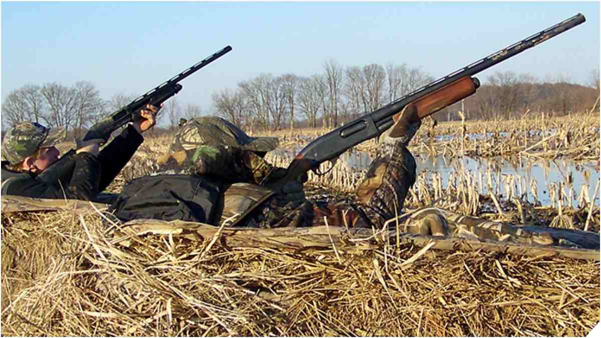 hunters in a field wingshooting for birds with shotguns remington 870s