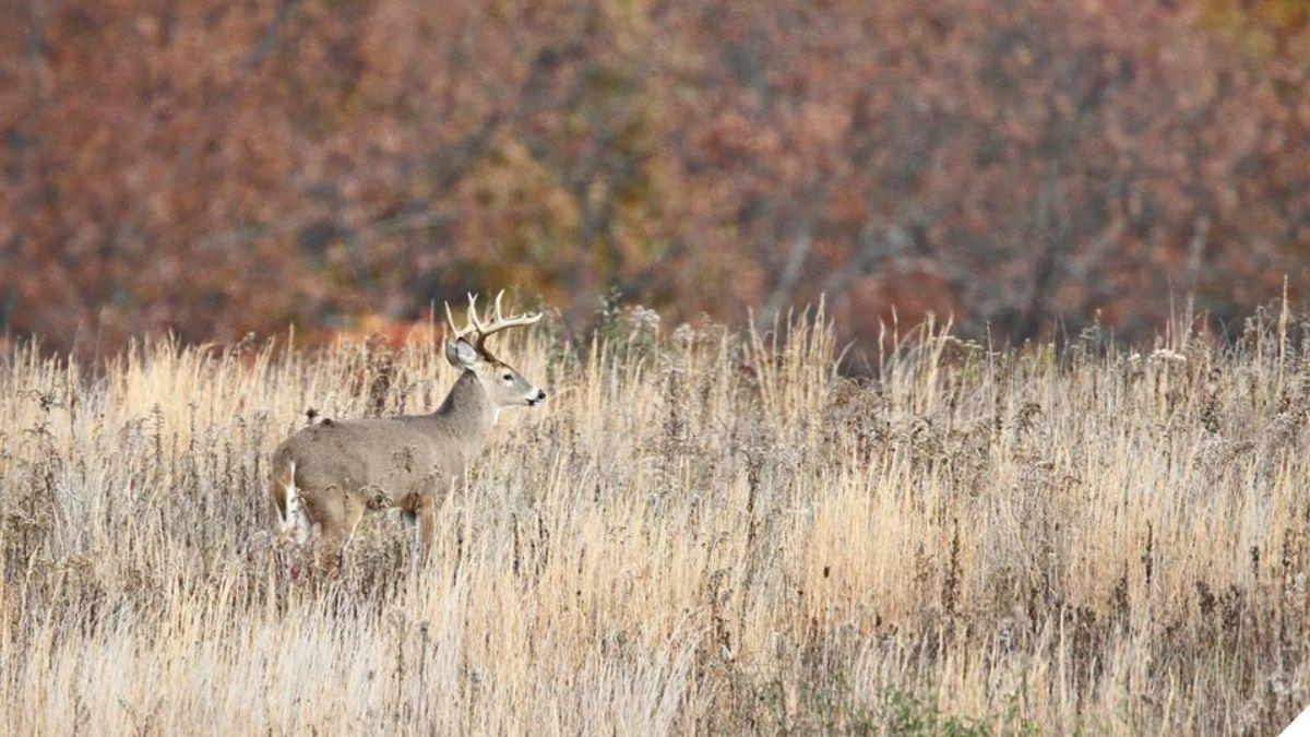 Pennsylvania Sunday Hunting Expansion Bill Passes House