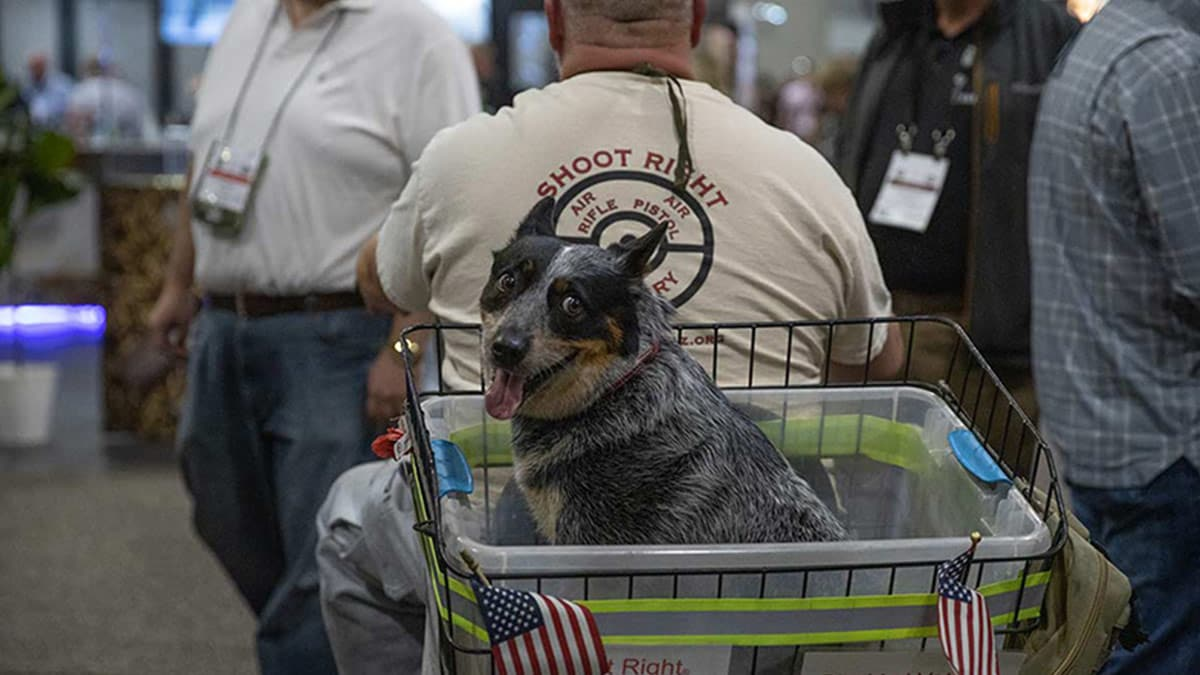 Dogs of SHOT Show