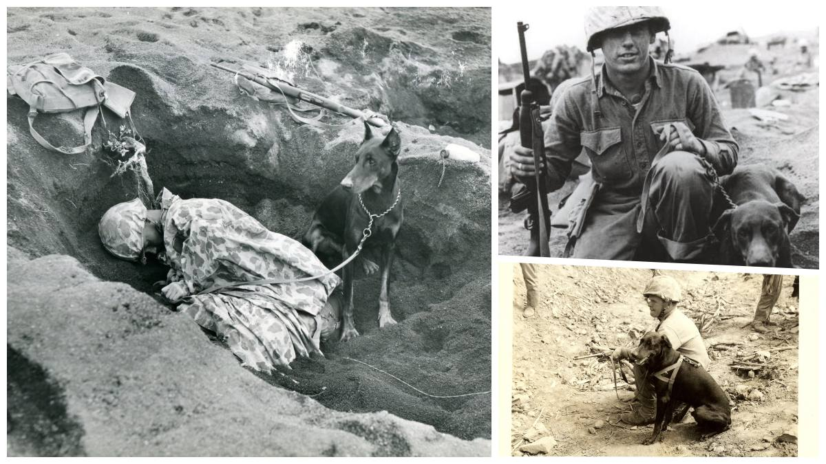"""""""Teams like this eliminated many (enemy) snipers who played possum in blasted pillboxes,"""" notes the USMC Archives. Note the handlers in each case are armed with an M1 Carbine, a handy item when minding a canine partner."""