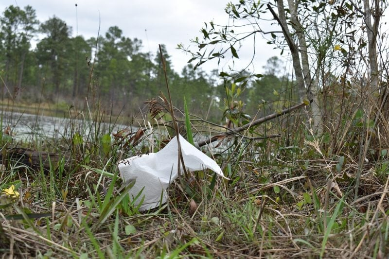 A roll of toilet tissue hiding out in the woods like a deer